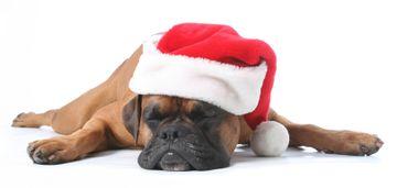 Sleepy Christmas Dog